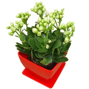 绿色室内植物图片