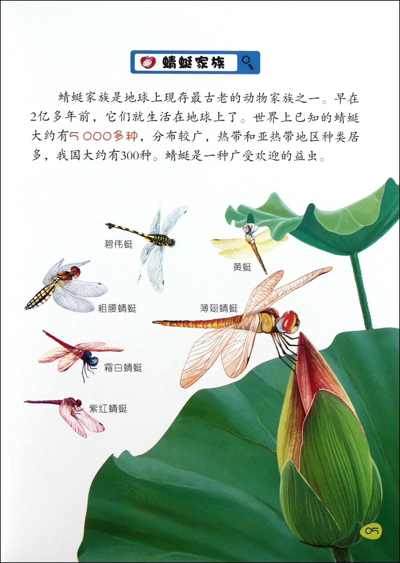 目录 蜻蜓家族 蜻蜓的身体结构 数不清的眼睛 薄而透明的翅膀 特技