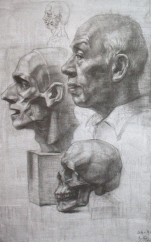大师素描头骨结构